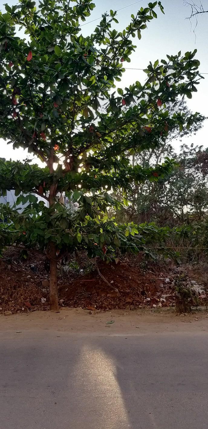 1560406525_banner_bangalore_41.jpeg